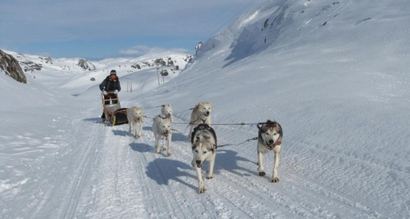 Alaskan Challenge: team building aziendale